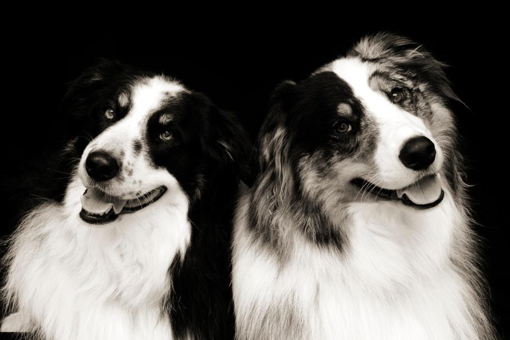 Brothers Dana Leigh Snidecor Photography ~ HeyGirlfriend.Net
