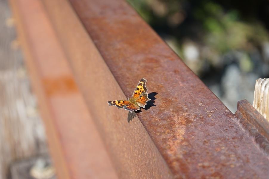 Butterfly on Bridge