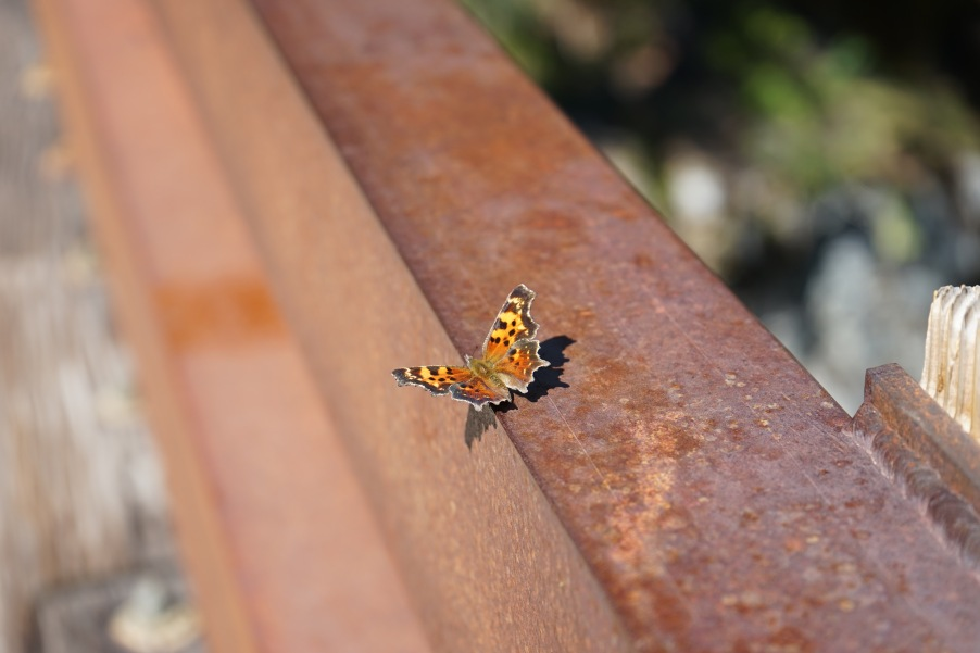Butterfly on Bridge