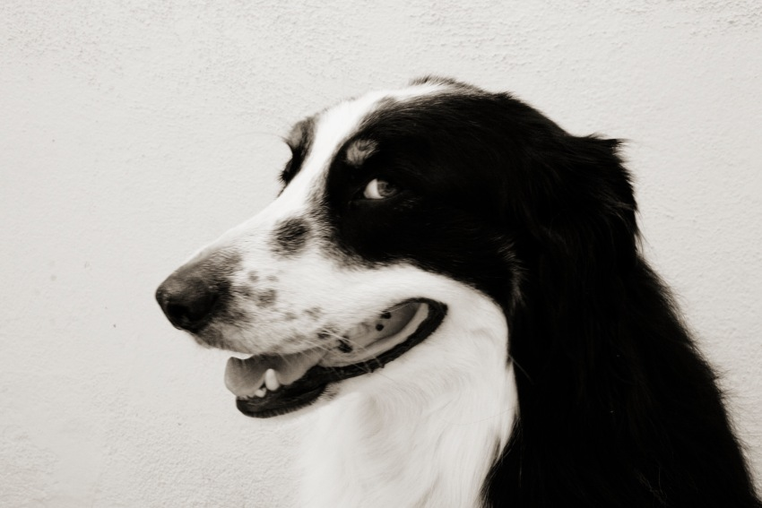Mr. Personality ~ Dana Leigh Snidecor Photography ~ HeyGirlfriend.Net