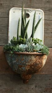 Succulents in a pot