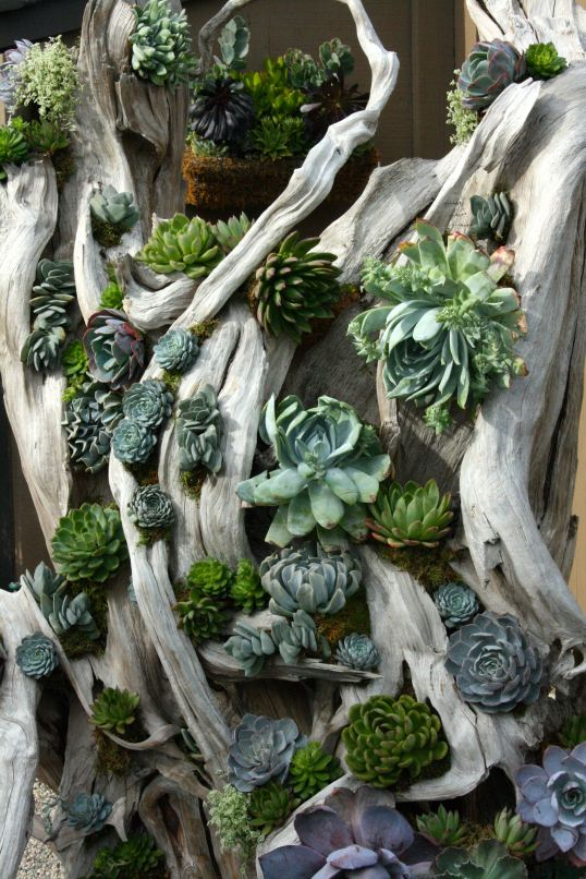 Succulents on wood