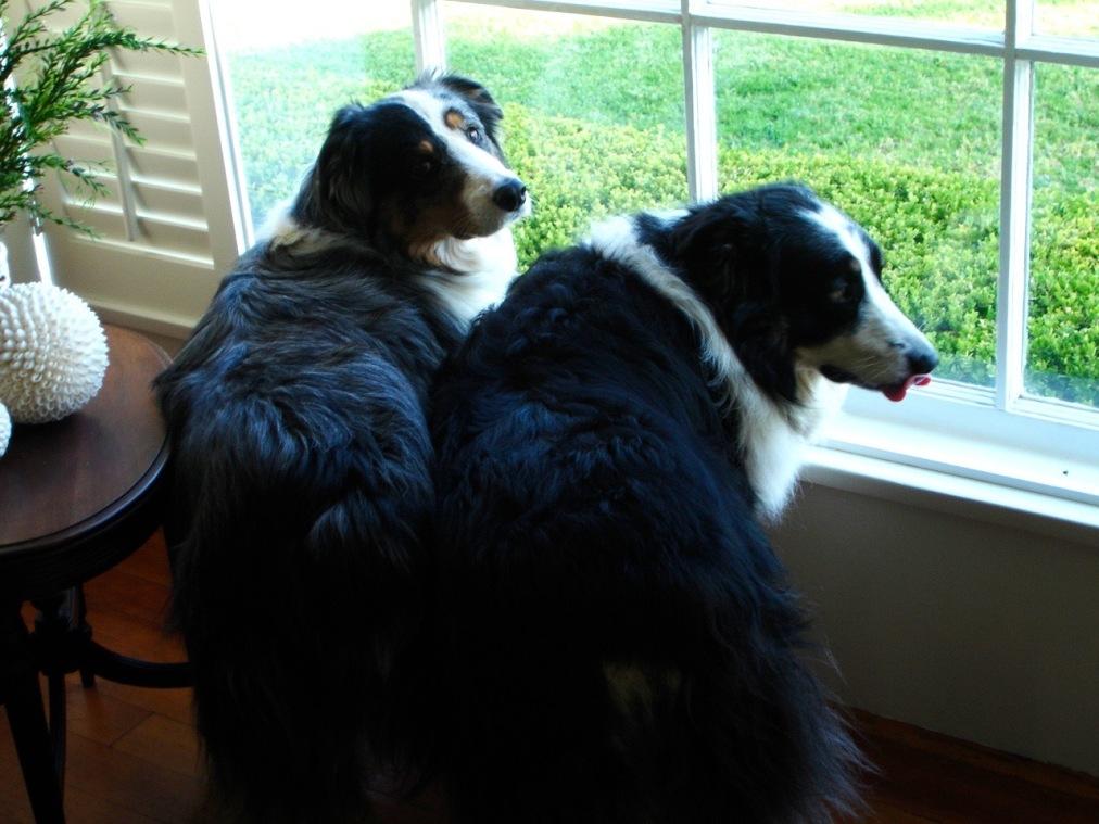 The boys at the front window HeyGirlfriend.Net