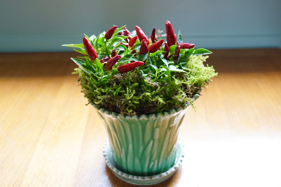 Get Rid of 100 Things ~ Get rid of dead leaves and replace ugly pot with a cute pot like this one!