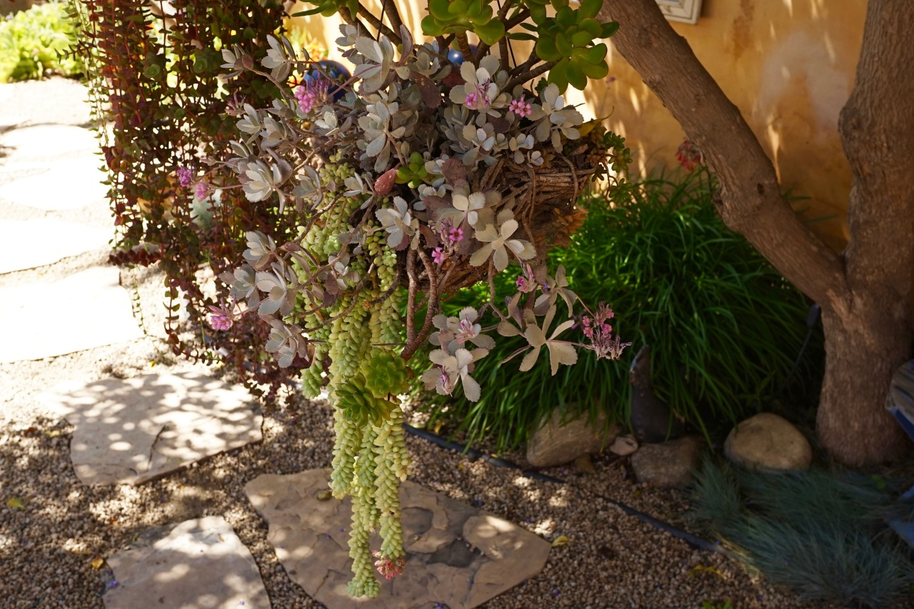 Drought Tolerant Plants ~ Southern California Garden Tour