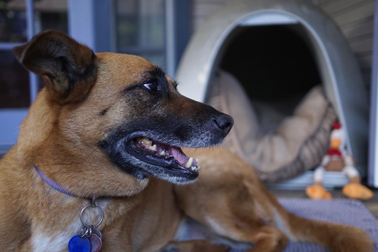 Precious Watchdog