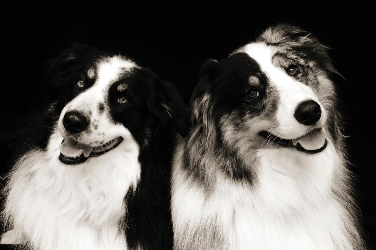 Dog-Portrait-by-Dana-Leigh-Snidecor