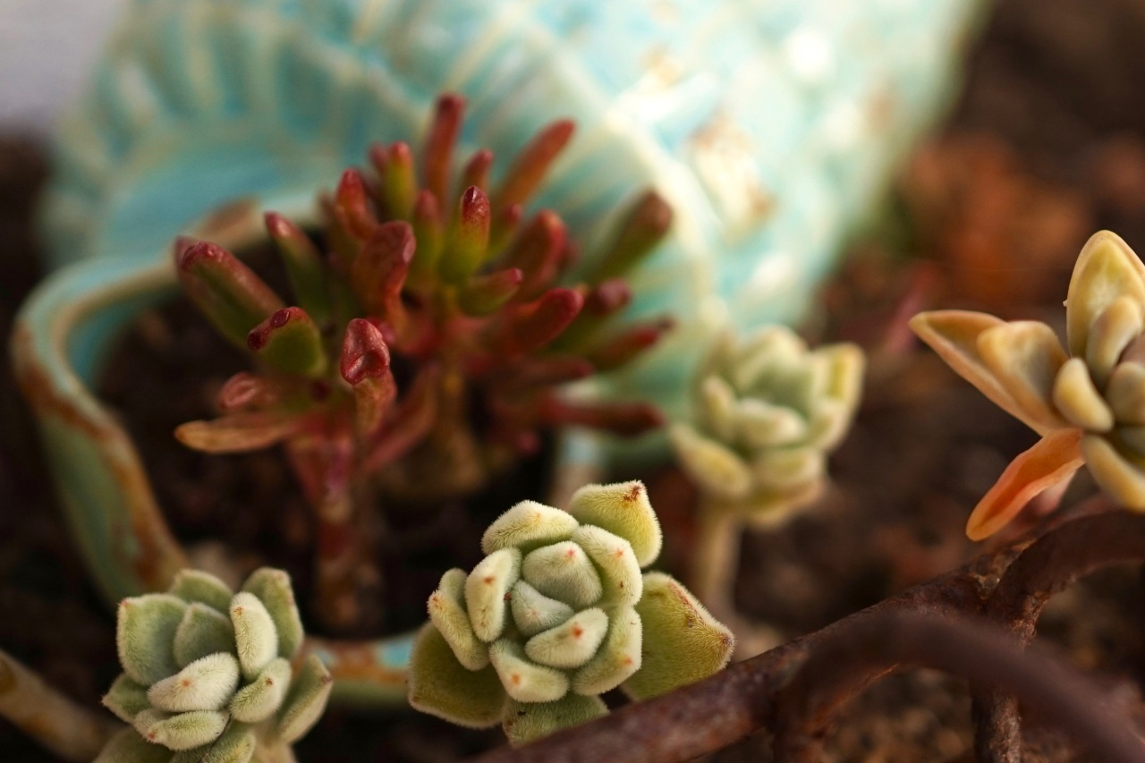 Succulents in Planter