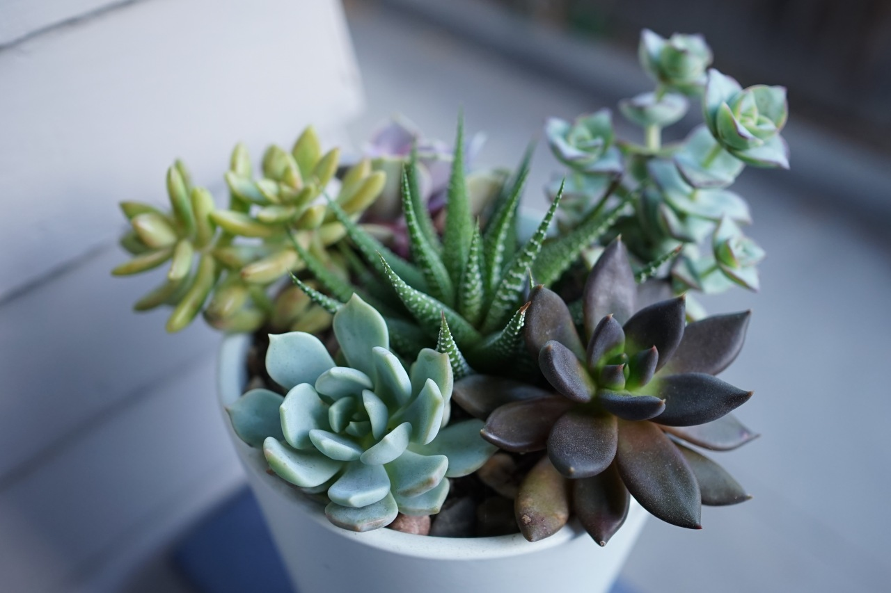 Potted succlents