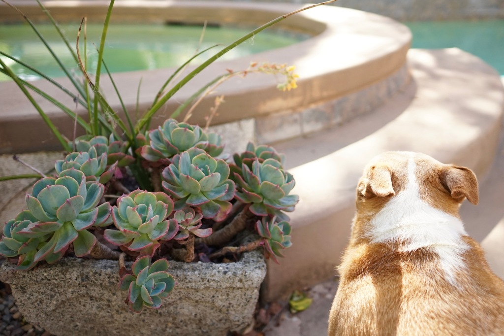 Succulents-and-refreshing-Pool