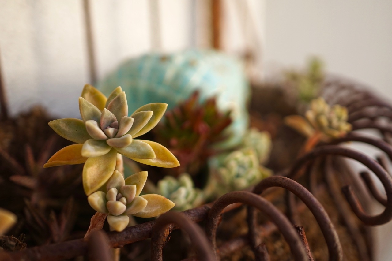 Succulents in Planter
