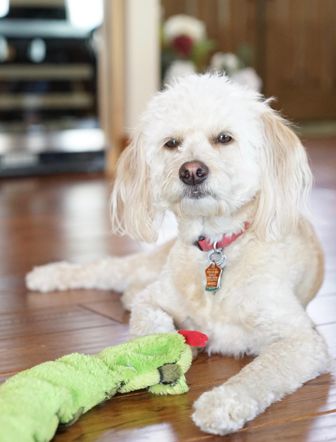 Dog-posing-for-camera